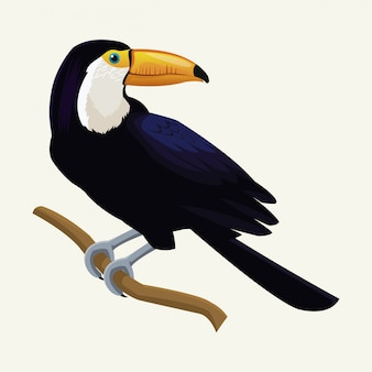 Toucan exotic tropical bird