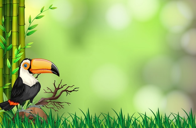 Toucan in nature background