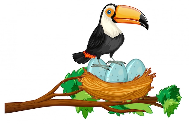 계란의 둥지에 앉아 큰 부리 새