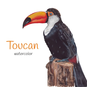 Toucan on a tree
