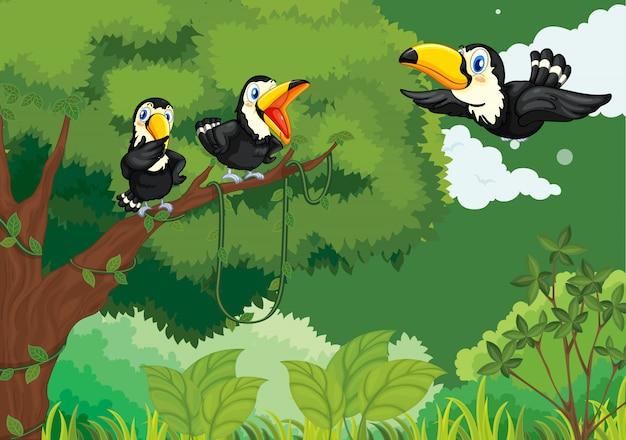정글에서 큰 부리 새