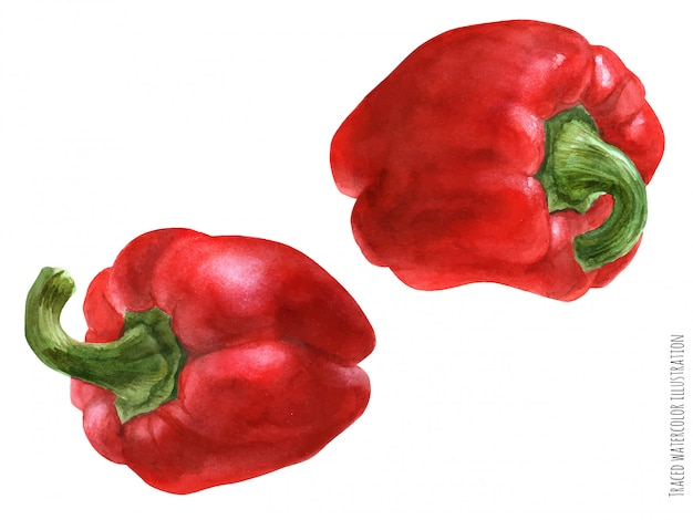 Traced watercolor illustration of bell peppers