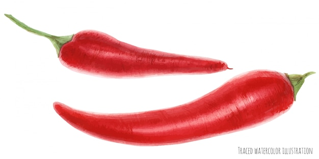 Traced watercolor illustration of cayenne pepper