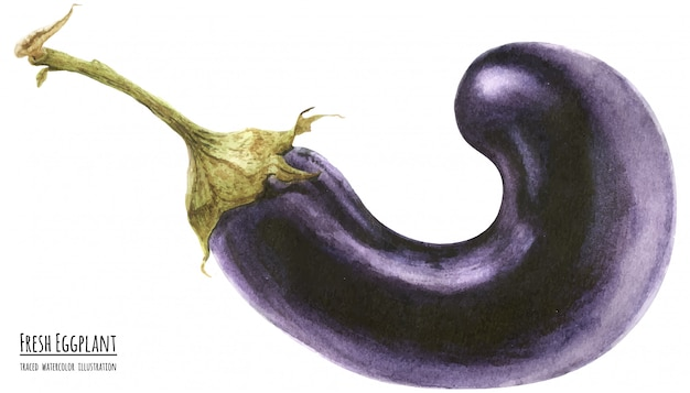 Прослеженная акварельная иллюстрация свежий фиолетовый баклажан