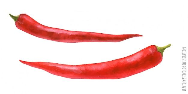 붉은 고추의 추적 된 수채화 그림