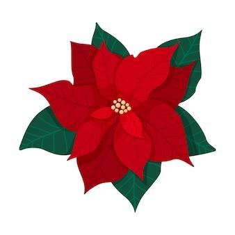 녹색 잎과 붉은 꽃잎이 있는 전통적인 크리스마스 포인세티아 꽃. 크리스마스 꽃 피 식물 흰색 배경에 고립입니다. 벡터 일러스트 레이 션.