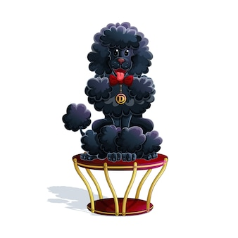 A trained black poodle sits on a circus stand.