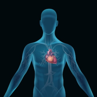 Transparent blue human silhouette with anatomical heart