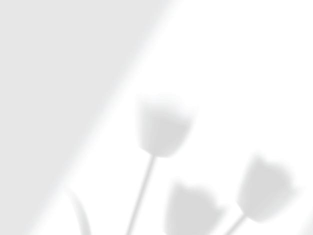 Прозрачные падающие тени из окна и тюльпаны