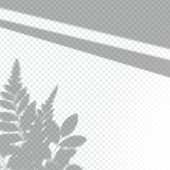 Transparent plant shadows overlay effect
