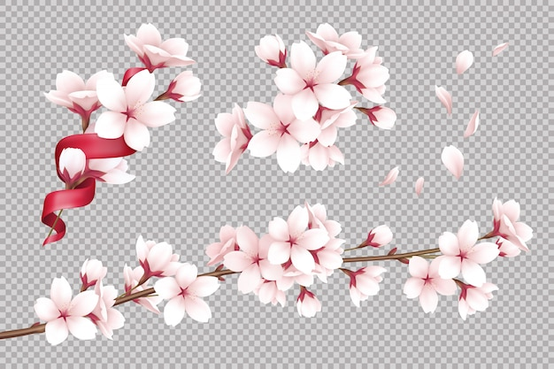 Transparent realistic blooming cherry flowers and petals illustration