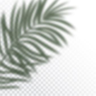 열대 잎의 투명한 그림자