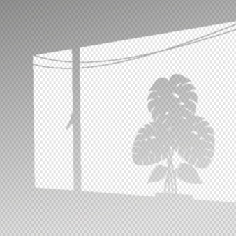 Transparent shadows overlay effect with monstera leaves