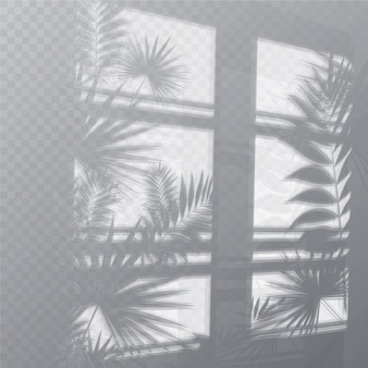 Transparent shadows overlay effect with plants and window