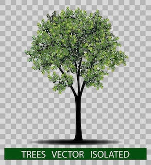 Tree and leafs Vector illustration