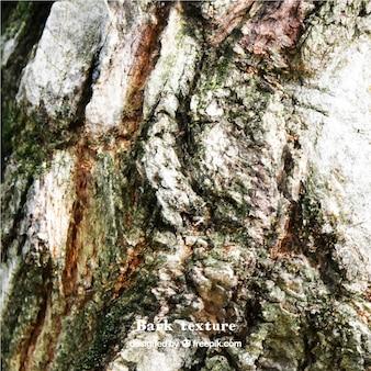 A tree bark realistic texture
