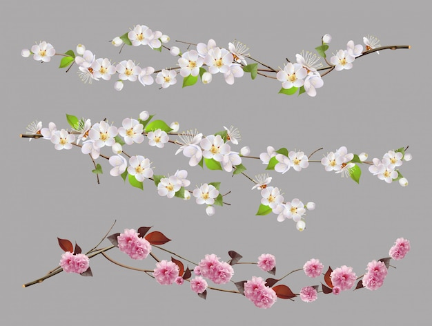 Tree branch, spring flowers 3d  set
