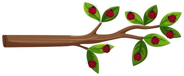 Tree branch with ladybug