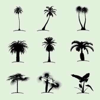 Tree collection flat icon with nine tropical palms of different kind illustration