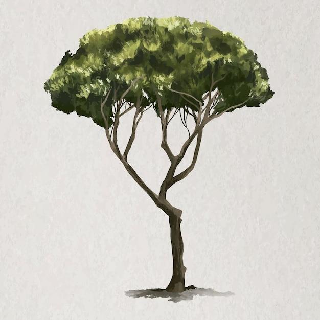 Elemento albero vettore pinus pinea