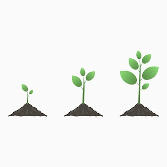 Tree growth. stages of the plant life cycle. vector illustration.