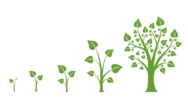木の成長ベクトル図。緑の木の成長、自然の葉の成長、植物の成長の図
