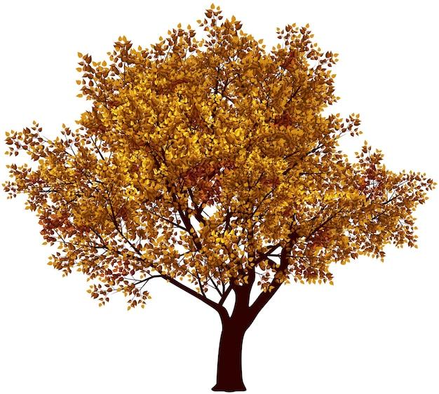 가을 나무