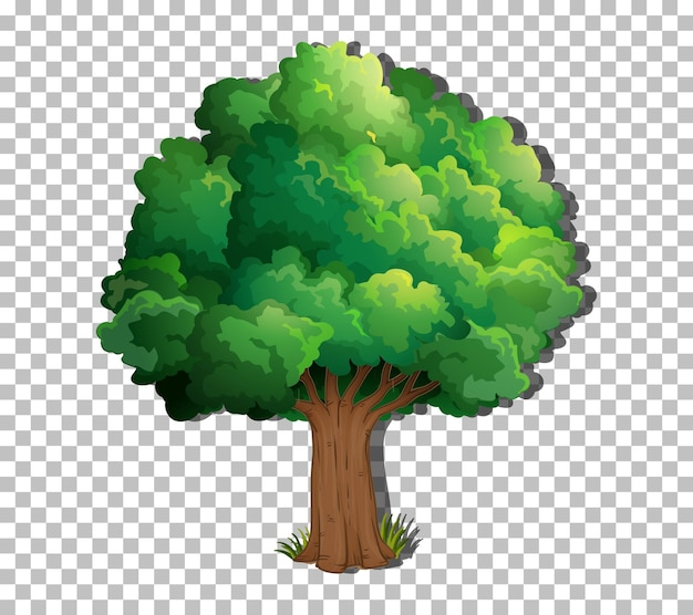 A tree isolated on transparent background