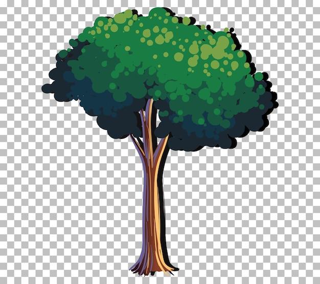 Un albero isolato su sfondo trasparente