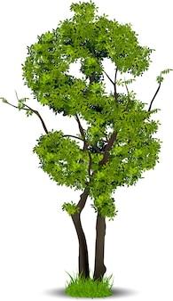 Tree leaf of money