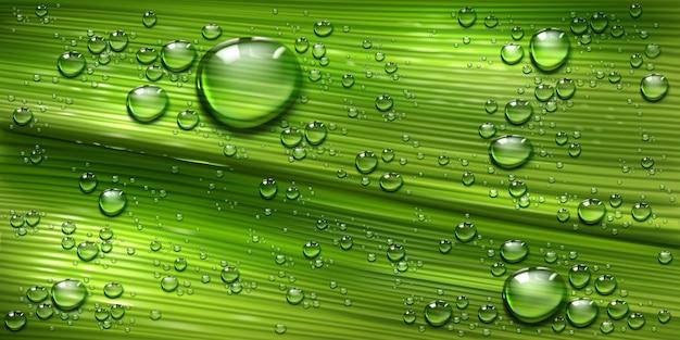水滴を持つ木の葉のテクスチャー、ヤシやバナナの緑の植物、純粋な輝く露の滴を持つ