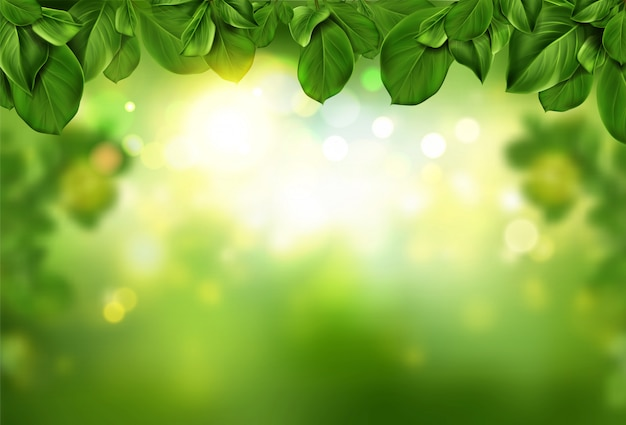 Tree leaves border on green abstract bokeh illuminated with sunlight shining and soft light sparkles.