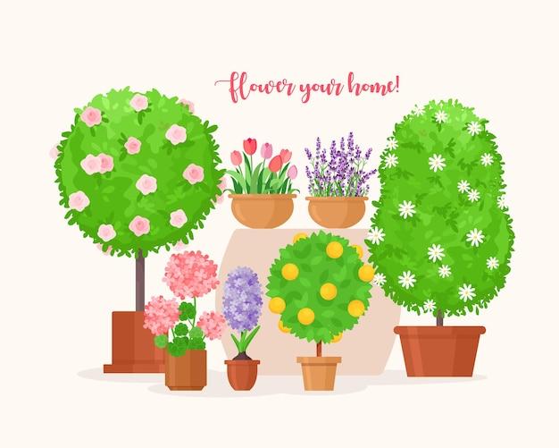 ポットのツリー有機観葉植物、プランター植木鉢のラベンダーまたはチューリップの花、バルコニーの家の装飾