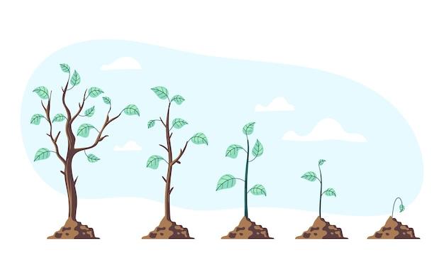 Дерево растение этапы роста этап этап фаза процесс