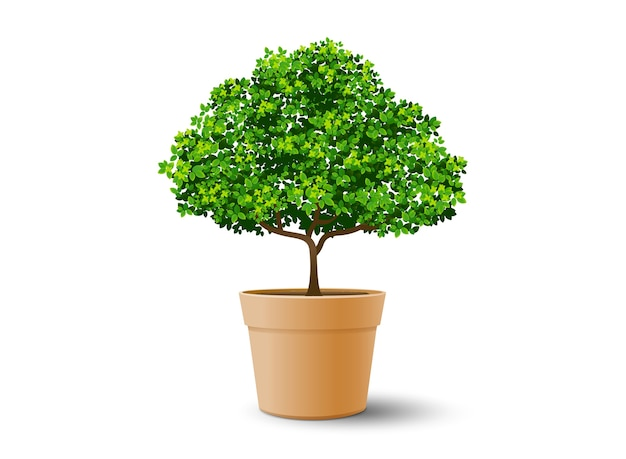 Tree plant in the pot