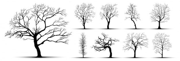 Силуэт дерева, изолированные на белом фоне.