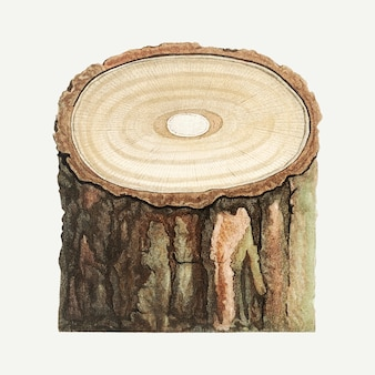 Tronco d'albero