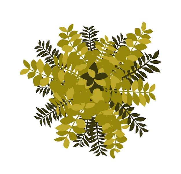 나무 상위 뷰입니다. 조경 디자인 프로젝트에서 사용하기 쉬운 자연의 왕관 식물. 자연 녹지 공간.