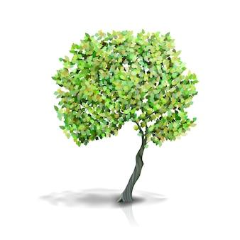 白い背景で隔離の緑の葉を持つ木