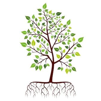 뿌리와 녹색 잎을 가진 나무