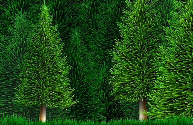 나무와 식물