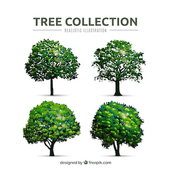 Trees collection in realistic style