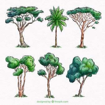 水彩スタイルの木コレクション