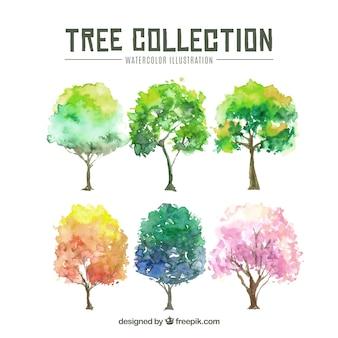 수채화 스타일에서 나무 컬렉션