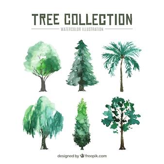 Collezione di alberi in stile acquerello