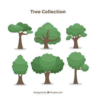 Trees collection with different species