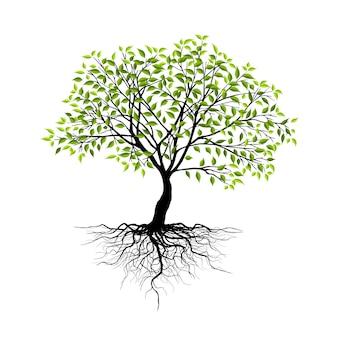 흰색 배경에 고립 된 나무입니다.