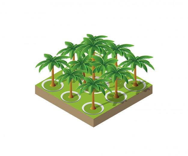 Деревья парковой пальмы