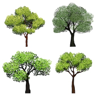 Деревья реалистичные. природа сад ботаническая коллекция деревьев с зелеными листьями иллюстрации