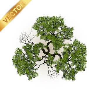 Trees top view for landscape